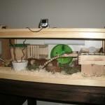 Kriteria kandang hamster yang umum digunakan, lengkap!