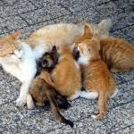 5 Ciri tanda bahwa kucing akan segera melahirkan
