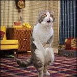 Solusi mengatasi kucing sakit diare ( mencret )