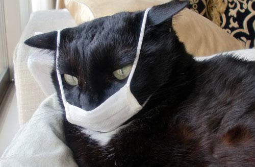 flu pada kucing