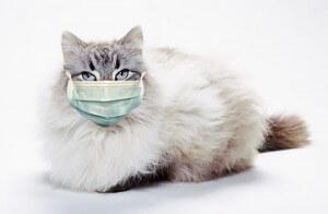alergi debu