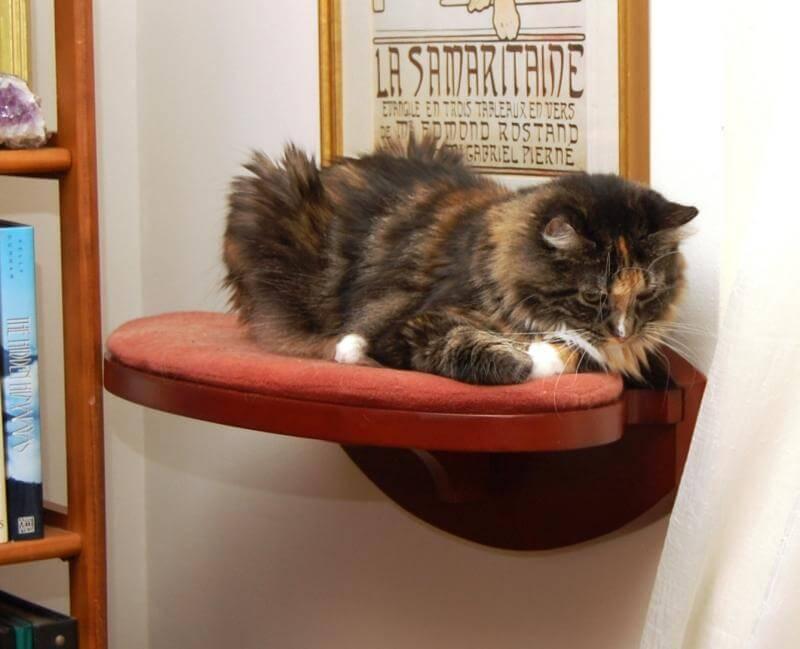 kucing ingin melahirkan