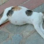 5 Cara mengamati ciri kucing yang hamil