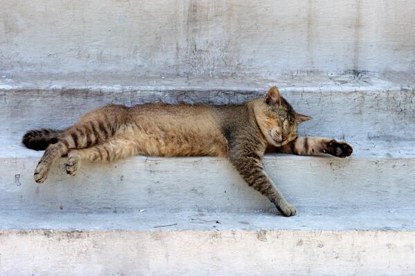 kucing tidur www.catster.com