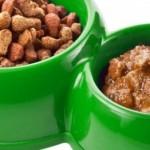 Bingung pilih makanan kucing? baca artikel ini