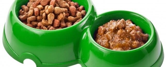 makanan kering vs makanan basah kucing