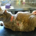 Penting, Indentifikasi penyakit kucing anda segera!