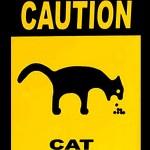 Inilah 4 faktor umum penyebab kucing muntah