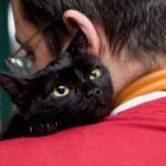 9 Perawatan harian yang wajib diberikan untuk kucing