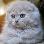 Mengerti makna bahasa tubuh kucing, wajib baca!