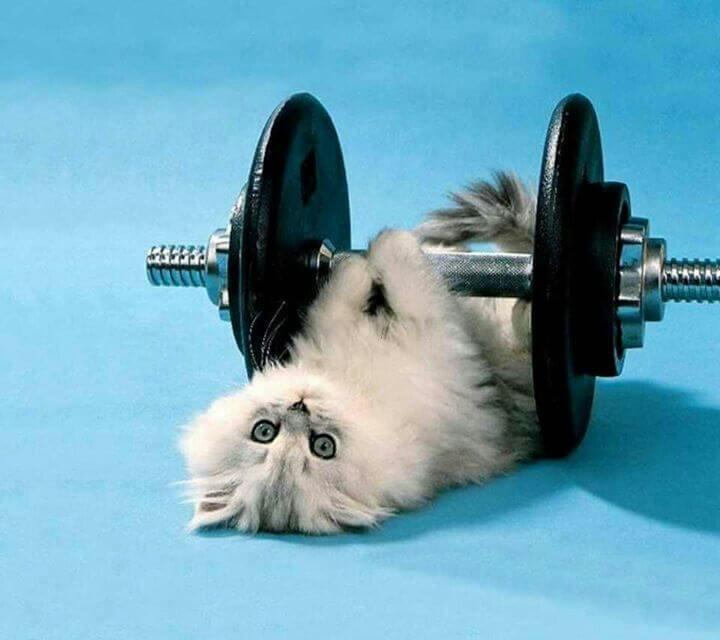 anak kucing memiliki karakter yang kuat