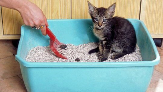 box pasir anak kucing / image by http://animal.ru