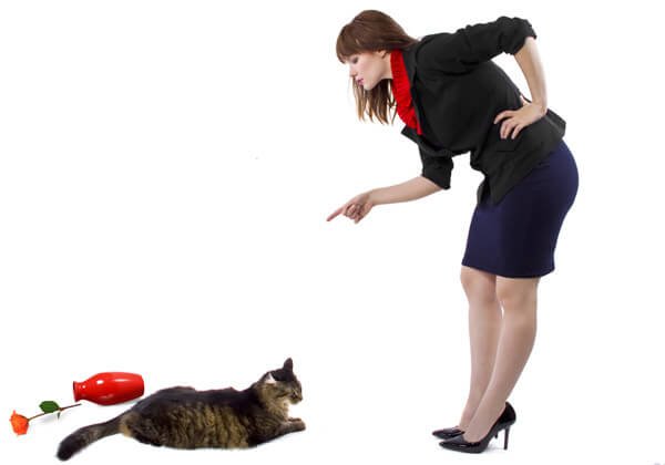 jangan memarahi kucing