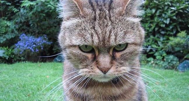 mata kucing marah