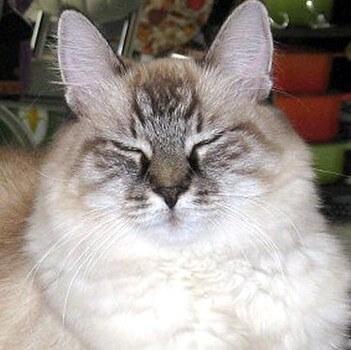 kucing mata berkedip
