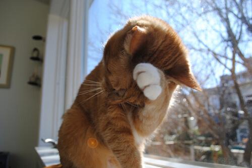 kucing pemalu