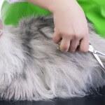 Jaga kucing persia tetap fit dengan perawatan tepat