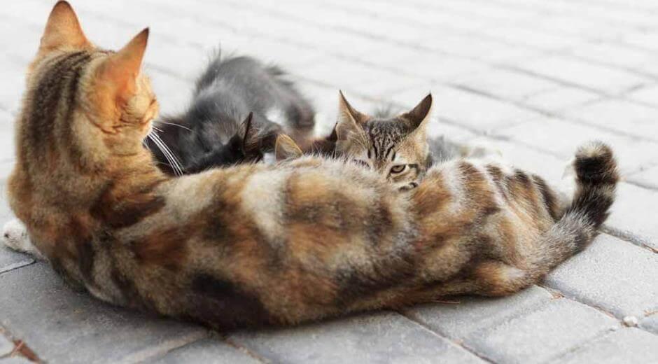 kucing telah melahirkan kitten yang lucu