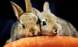 makanan ternak kelinci