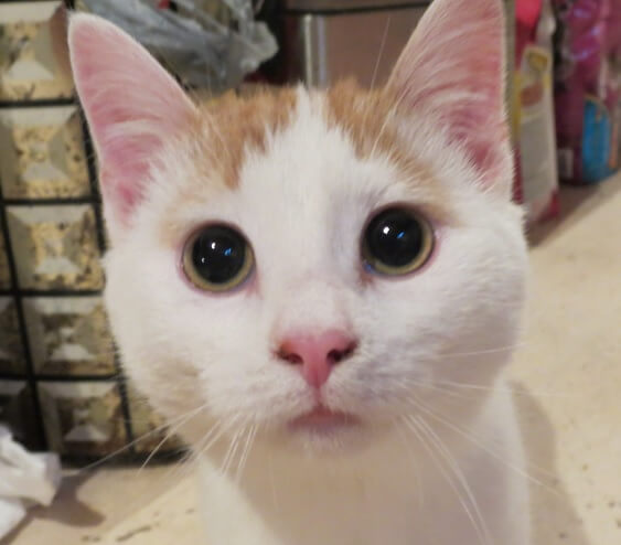 mata kucing membesar