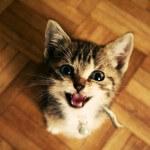 5 langkah menghentikan kucing mengeong berlebihan
