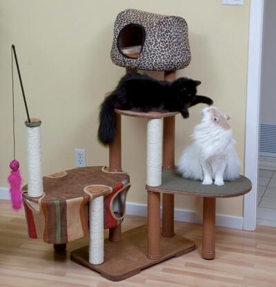 pohon untuk kucing