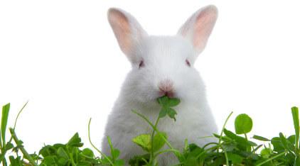 sayuran untuk kelinci