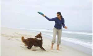 Bermain dengan anjing