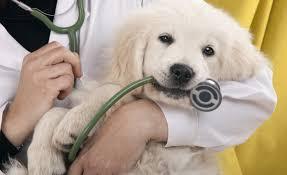 Dokter khusus anjing