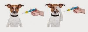 Vaksinasi pada anjing