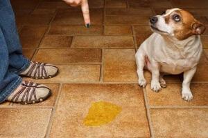 anjing yang dimarahin