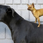 Harga pasaran anjing ras 2016, Lengkap!