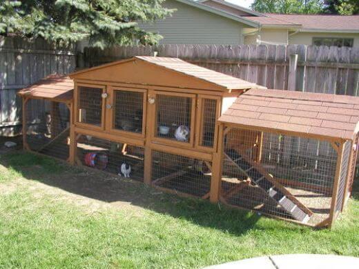 kandang kelinci di halaman rumah