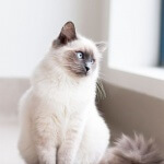 Daftar nama keren dan cantik untuk kucing peliharaan