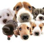 12 Anjing lucu yang populer di sosial media ( bonus gambar )