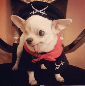 Yogurt the pirate