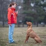 3 Metode pelatihan basic agar anjing patuh