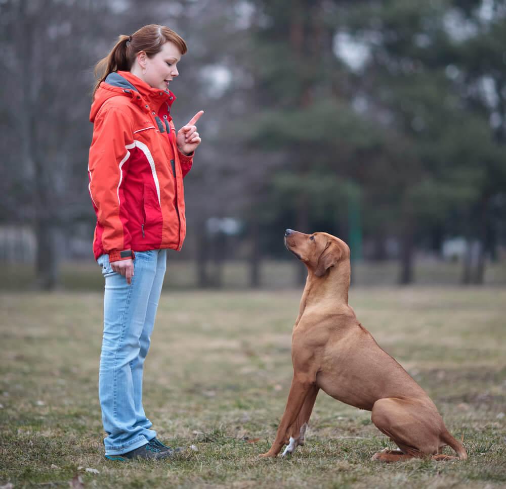 cara melatih anjing untuk duduk
