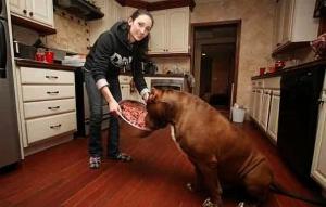 Makanan anjing pitbull