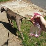 Metode menghilangkan kutu anjing tanpa obat kutu