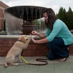 Tips memelihara si cerdas golden retriever