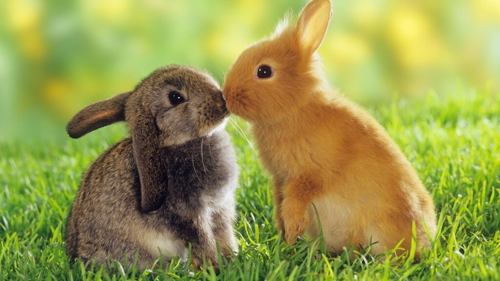 Kelinci lucu 1