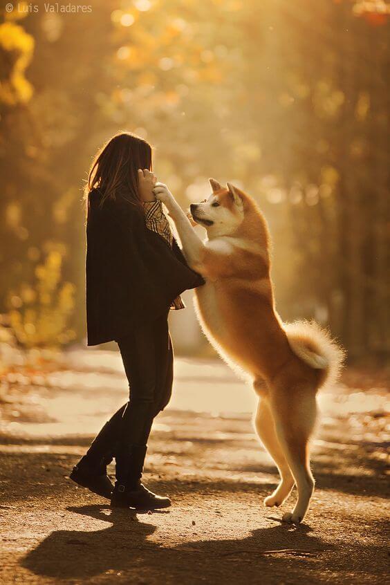karakter anjing akita