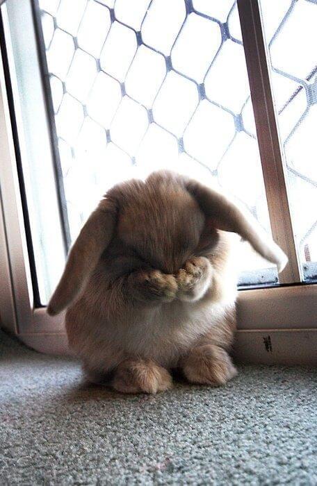 kelinci lucu 3