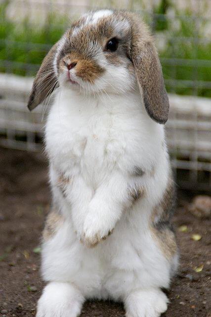 kelinci lucu 5
