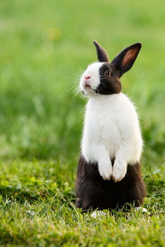 kelinci lucu 8