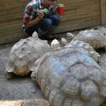 Menu makanan sehat untuk kura-kura