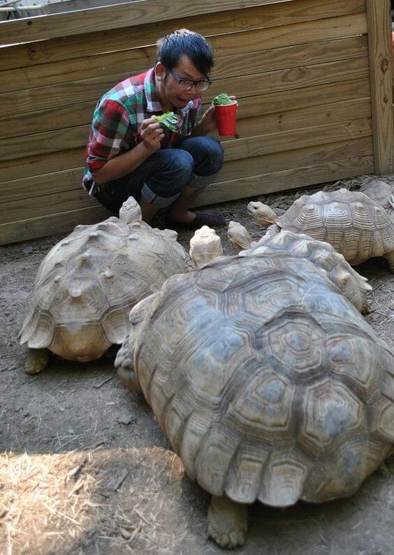 makanan kura-kura