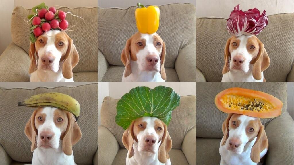 sayuran dan buah untuk anjing