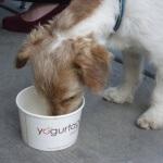 Raw food memenuhi Nutrisi yang diperlukan anjing?